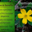damiana benefits