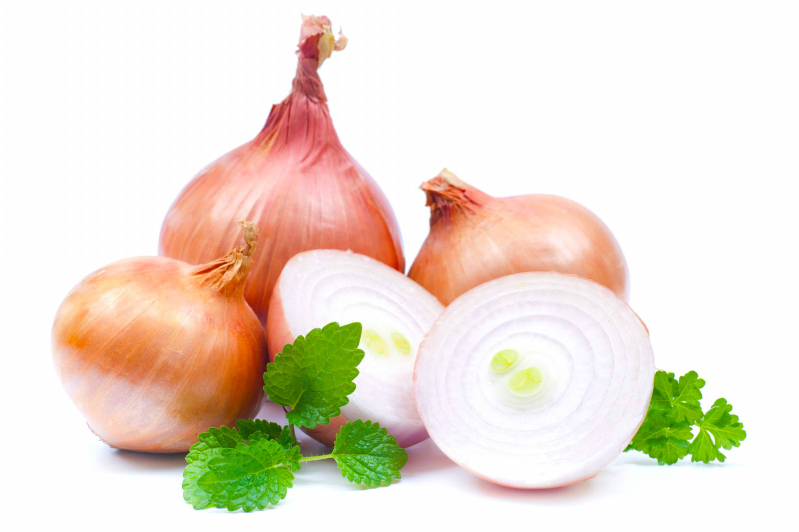 Onion – The King of Vegetables - Best Herbal Health