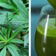 juicing raw cannabis