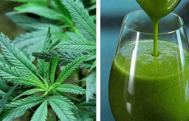 juicing raw cannabis