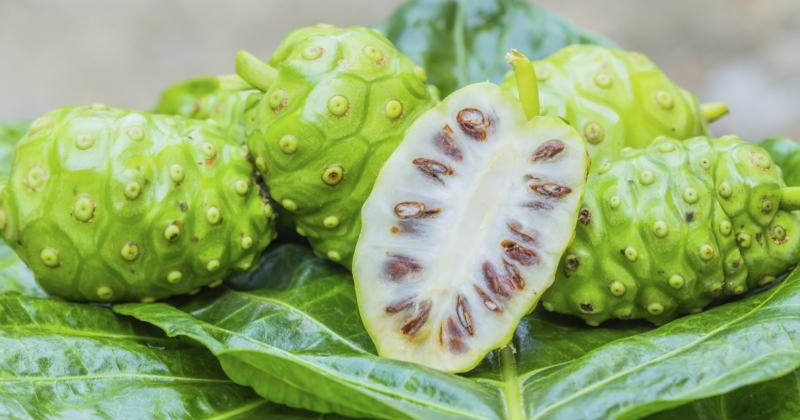 noni fruit healthy fruit salads