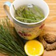 Pine-Needle-Tea-Cancer-Killer-and-All-around-Health-Tonic