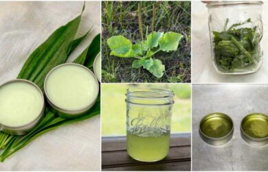 homemade plantain salve