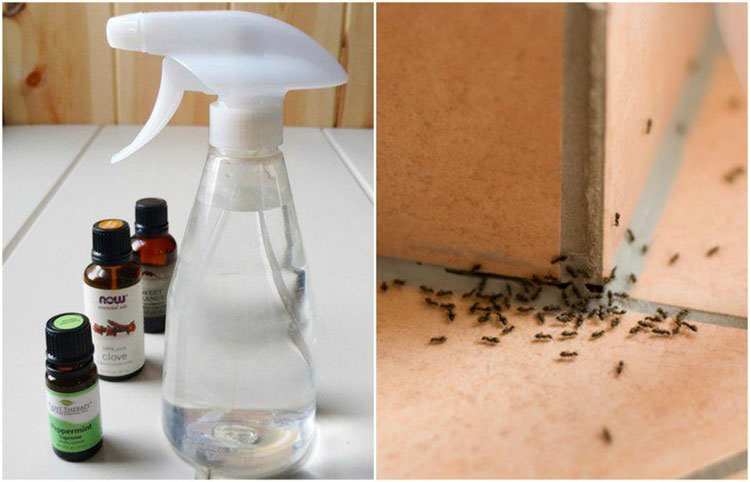 how to make ant spray