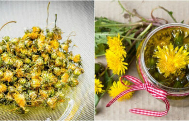 homemade dandelion oil