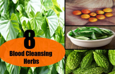 Blood-Cleansing Herbs
